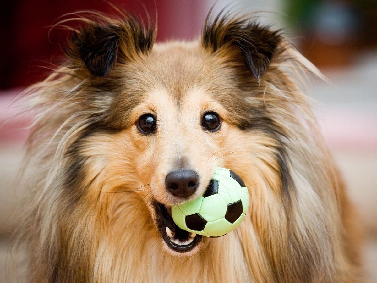 Cinco juegos para perros inteligentes