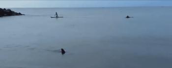 Apareció un tiburón en la costa de Santa Clara del Mar: cuándo fue el único ataque registrado en el país