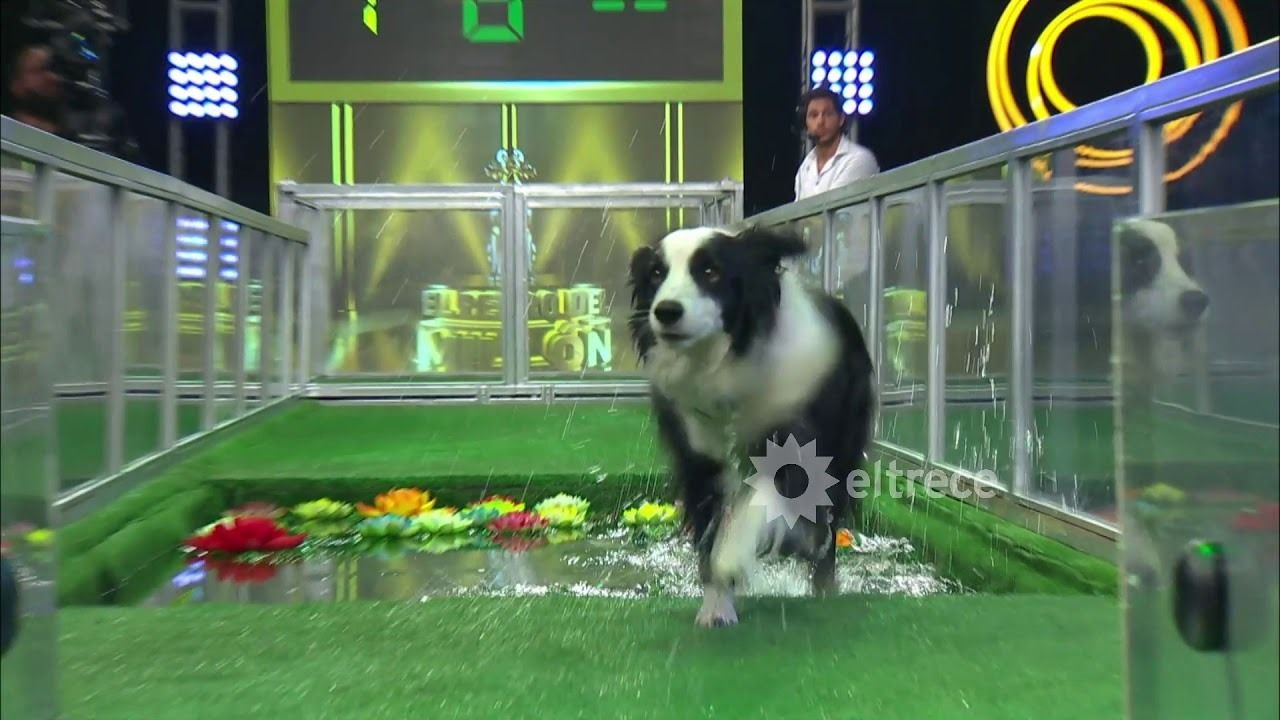 """Polémica por """"El perro del millón"""", el plan de Guido Kaczka para que dejen de dudar de sus juegos"""