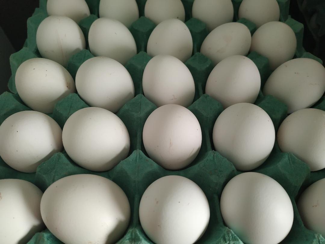 Lácteos, huevos y azúcar: los 12 bienes que más subieron con la inflación de abril