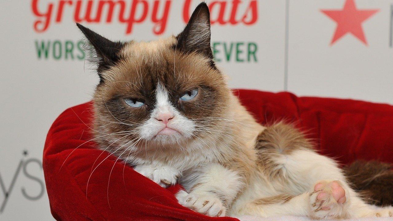 """Por qué murió """"Grumpy Cat"""", la gata enojada más famosa de las redes"""