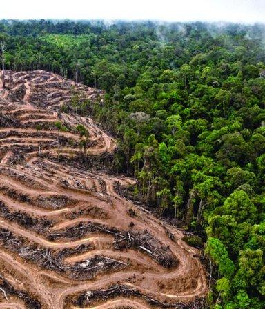 """Biodiversidad: """"Cada hora desaparecen bosquesdel tamañode20 canchasdefútbol"""""""