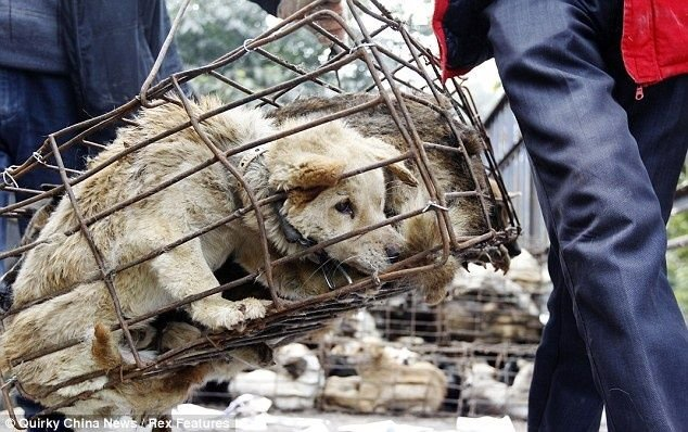 El festival fue cuestionado por ONG de protección de animales