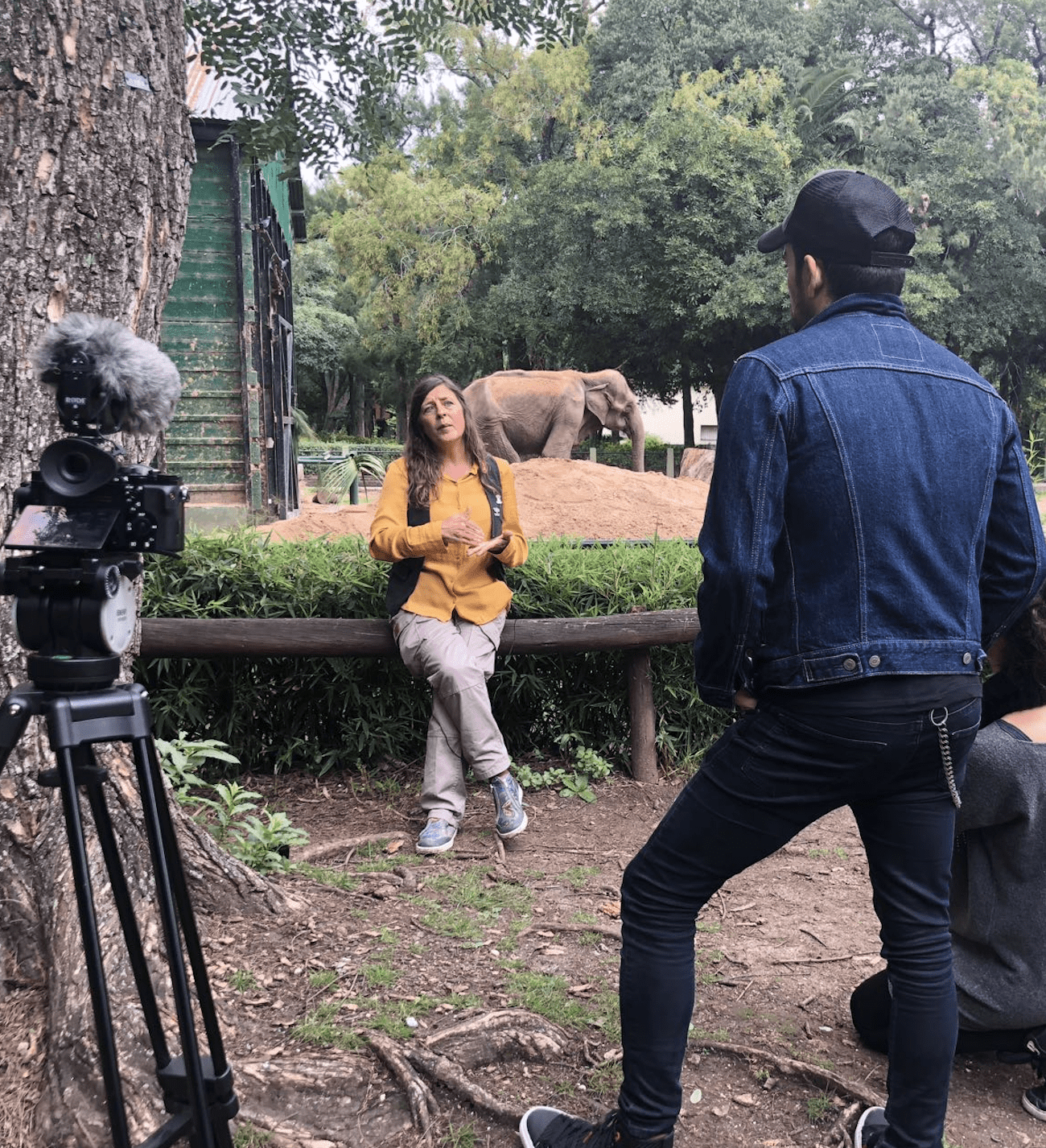 """""""Caravana"""", el documental sobre la muerte de Pelusa con el que intentan rescatar a otros 9 elefantes"""