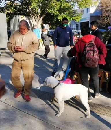 Un empresario atropelló a un paseador y mató a cuatro perros: los vecinos casi lo linchan