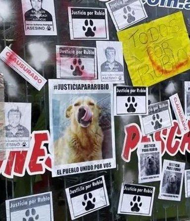 Crueldad sin límites: mató a un perro callejero después de arrastrarlo con su camioneta