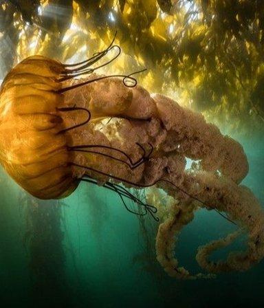 VIDEONOTA | Bajo del mar: las impactantes fotografías submarinas del concurso Ocean Photography