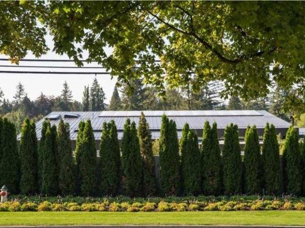Taparon el muro de la polémica con árboles por las quejas de los vecinos.