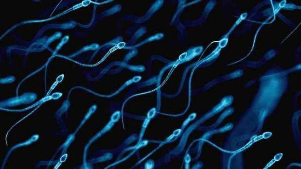 alt title espermatozoides
